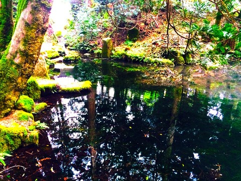 みたらし池